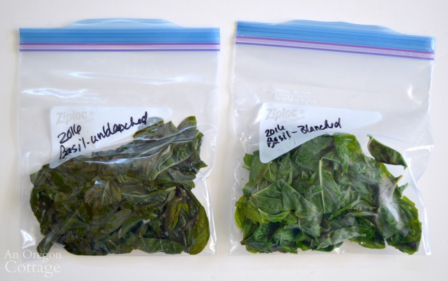 Freezing Basil Leaves-blanched and unblanched comparison