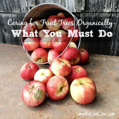 Organic Care for Fruit Trees-Simplify Live Love