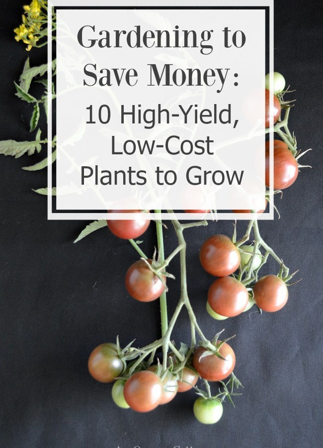 Gardening to Save Money 10 High-Yield, Low-CostPlants to Grow