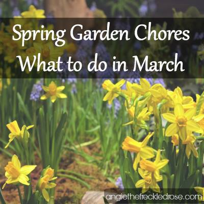 Garden to-dos for Spring-March-TheFreckledRose