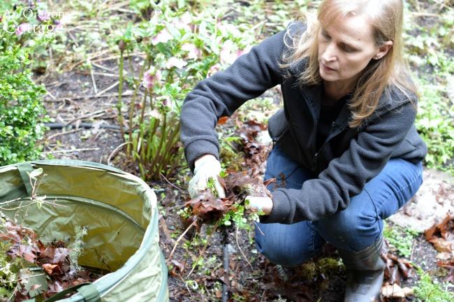 Spring garden cleanup-removing debris