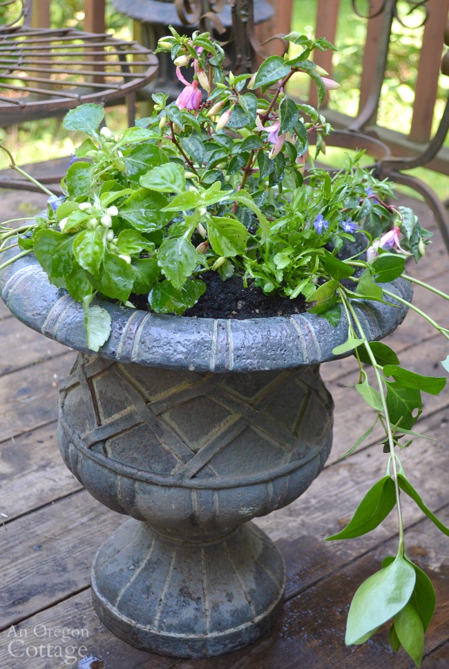 Easy Flower Pot Design for Shade recipe