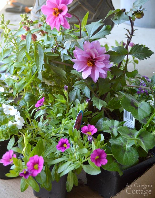 Flower Pot Design for Sun-flowering plants