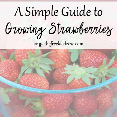 Guide to Growing Strawberries at The Freckled Rose