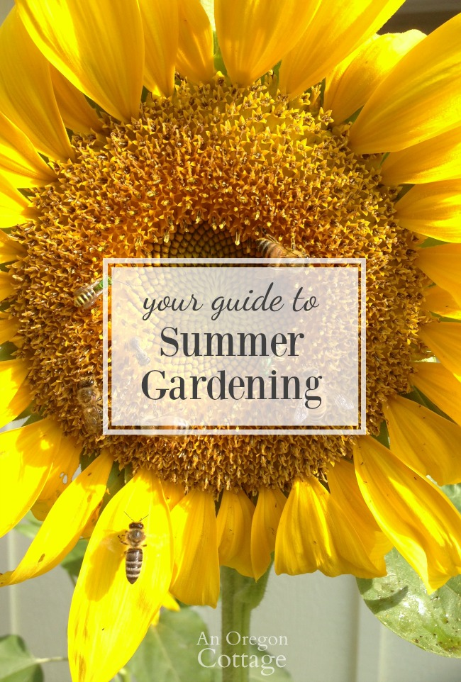 Your guide to summer gardening success through the heat - Summer time gardening tips ...