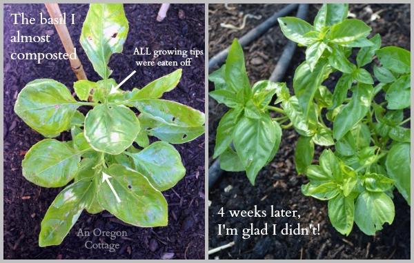 Summer Gardening-keep pests away