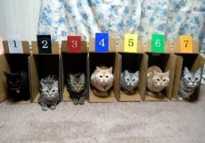 organized kitties