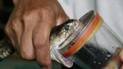 huile de serpent
