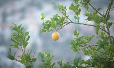 huile essentiel citron