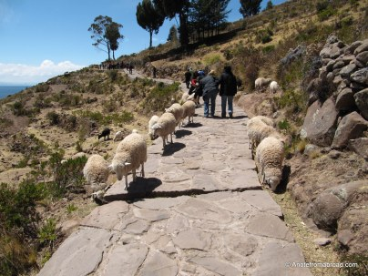 Walking the steep trail, up, up, up...