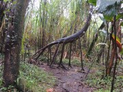 Monster in the rain forest