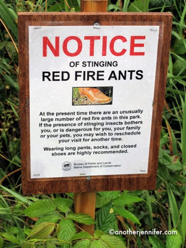 red fire ants warning