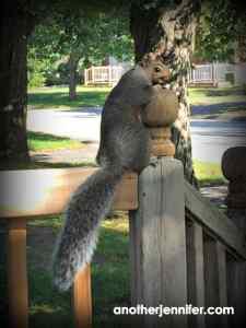Wordless Wednesday: Squirrel Senior Picture Day