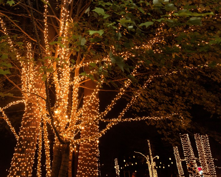 Trees Wrapped In Lights For Wedding