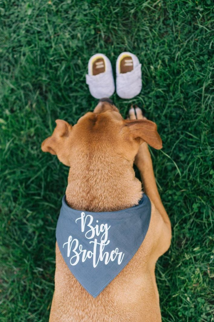 Big Brother Dog Bandana Pregnancy Announcement
