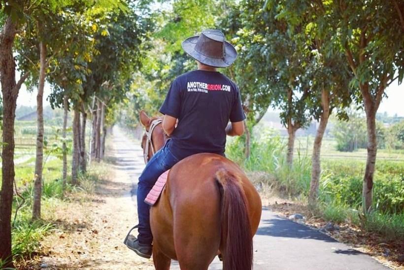 harga kuda biaya kursus berkuda bale kuda stable