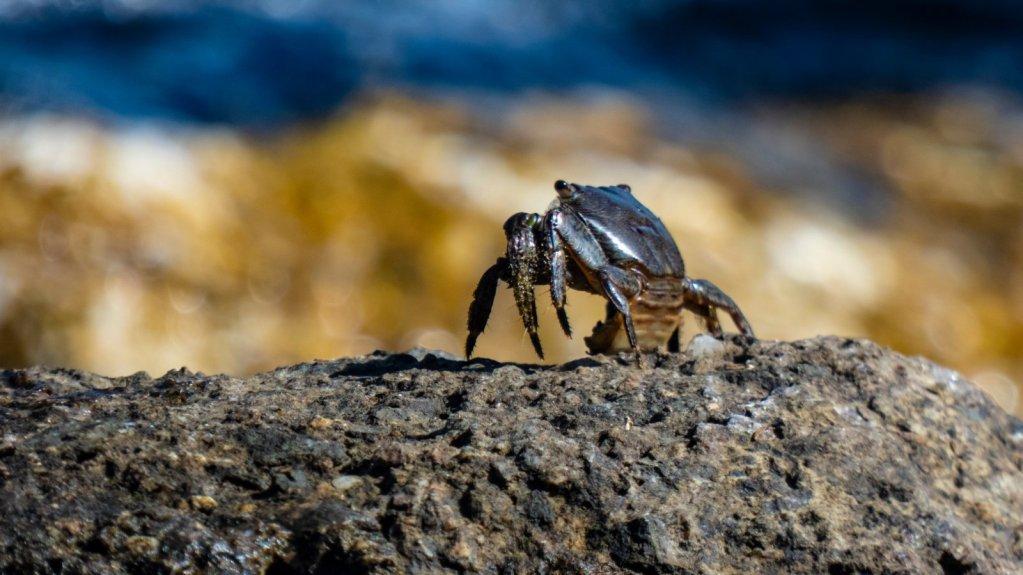 crabi la eforie sud