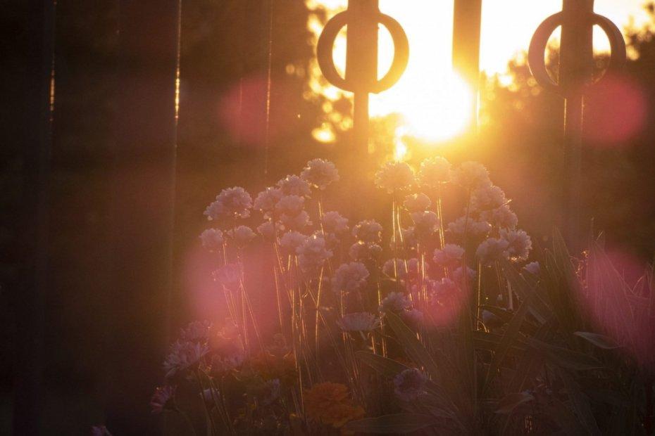 apus printre flori parc Izvor