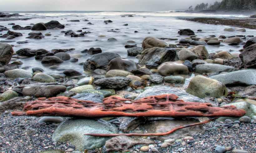 drift wood on rack near the shore