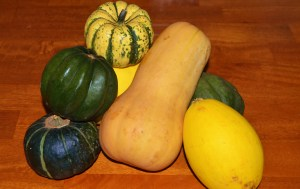 A bountiful harvest of squash thanks to Laughing Fox CSA