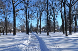 We strolled through a frozen and particularly beautiful City Park.