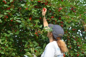 Me Cherry Picking