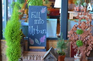Fall into Urban