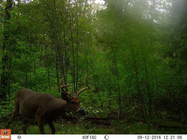 buck-2