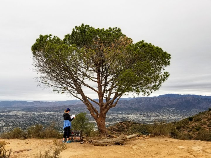 The Wisdom of a Tree