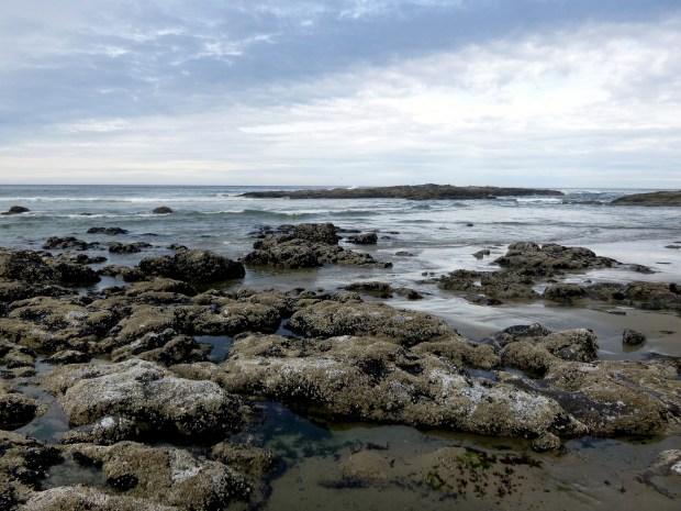 Barnacle-encrusted basalt at low tide, Pacific Coast, Oregon