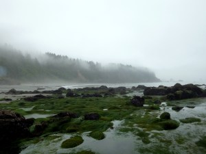 Fog shrouding the cliffs at Third Beach with sea grass and tide pools in foreground, Olympic National Park