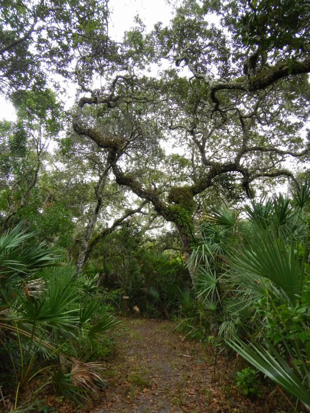 Eldora Hammock Trail, Canaveral National Seashore, Florida