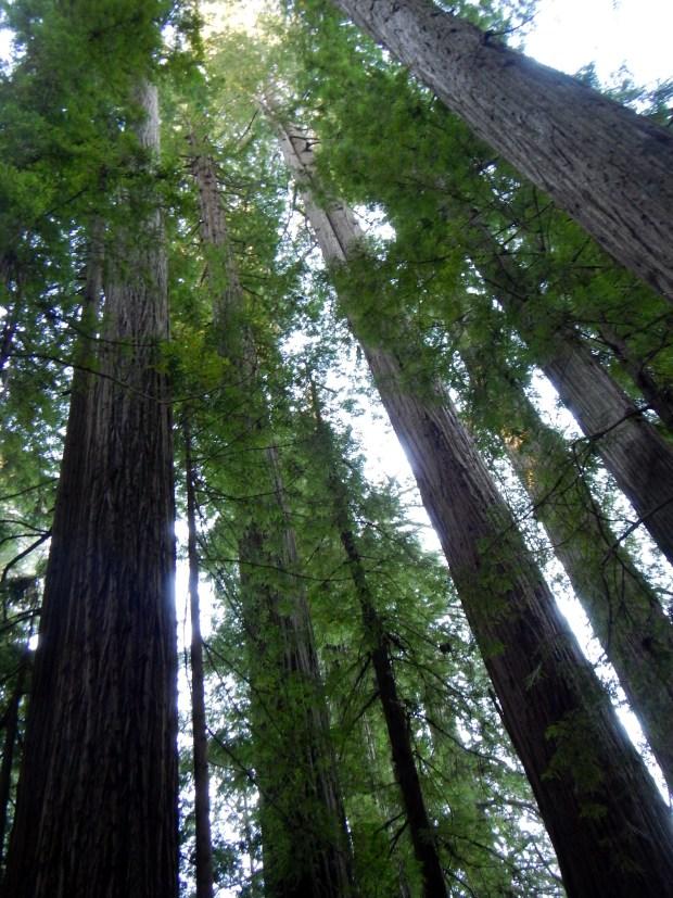 Cathedral Trees Trail, Prairie Creek State Park, California