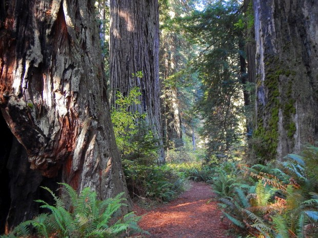Revelation Trail, Prairie Creek State Park, California