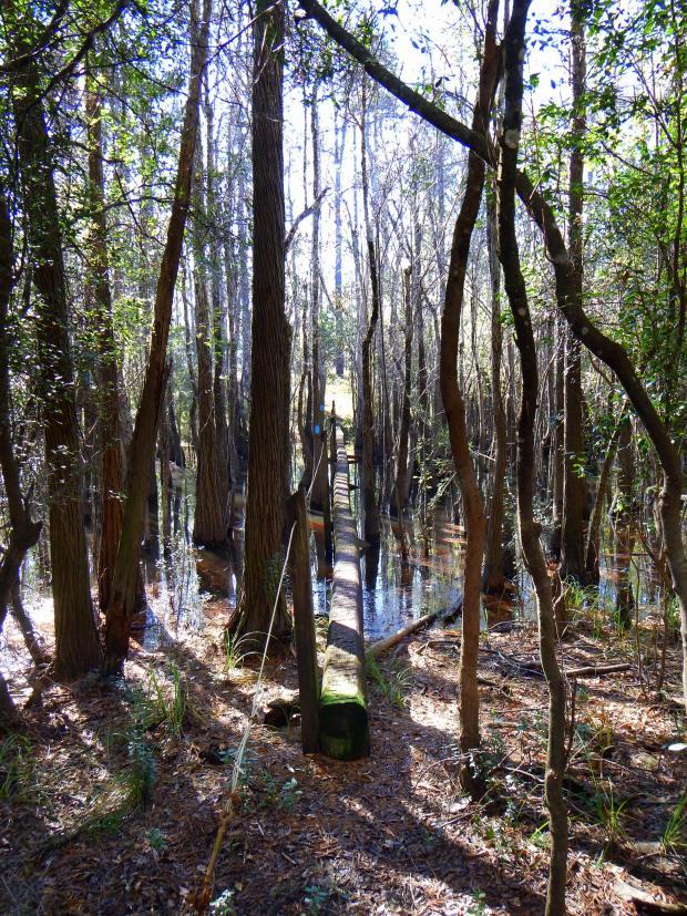 Log bridge on Wright Lake Trail, Apalachiola National Forest, Florida
