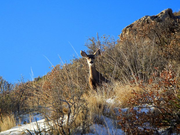 Deer friends on Guadalupe Peak Trail, Guadalupe Mountains National Park, Texas