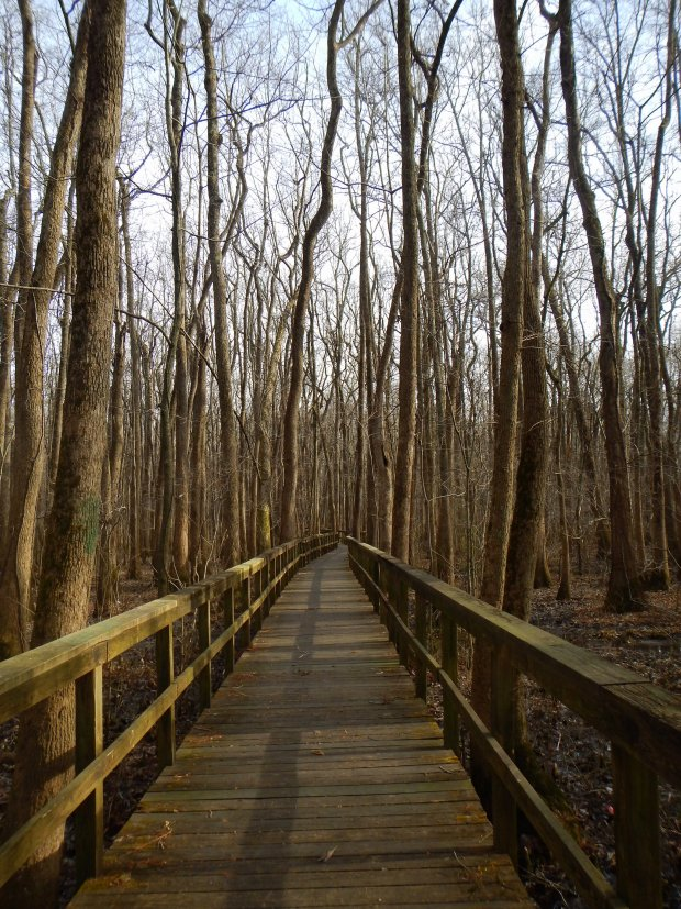 Elevated boardwalk trail, Cypress Grove Nature Park, Jackson, Tennessee