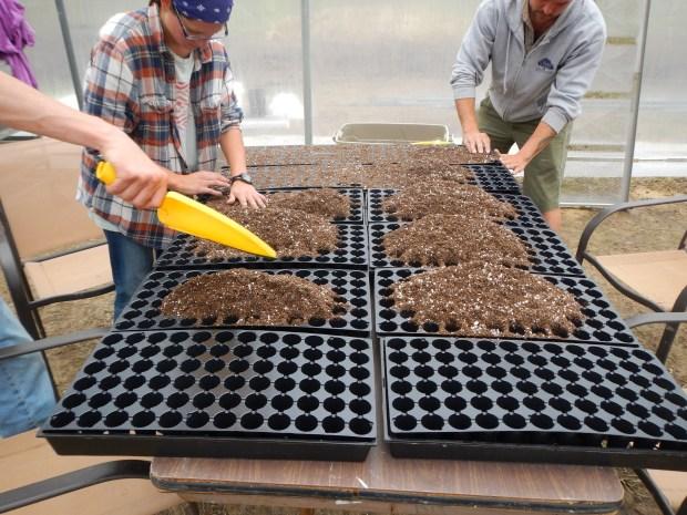 Spreading soil, New Day Farm, Clinton, Louisiana