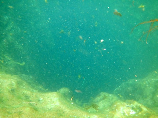 Underwater view into the spring, Jacobs Well, Texas