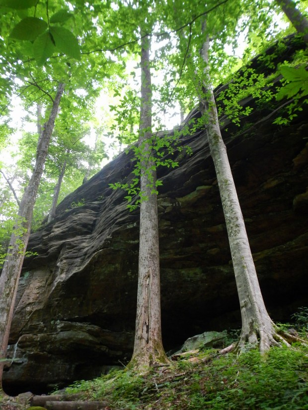 Looking up at the sandstone along the Split Bow Arch Trail, Big South Fork Recreation Area, Kentucky