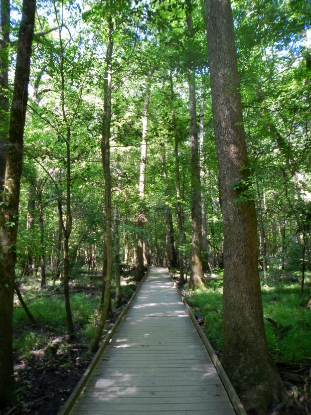 Boardwalk Loop Trail, Congaree National Park, South Carolina