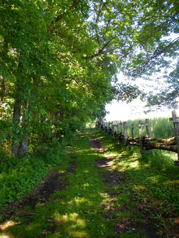 Path towards schoolhouse, Hensley Settlement, Cumberland Gap National Historical Park, Kentucky