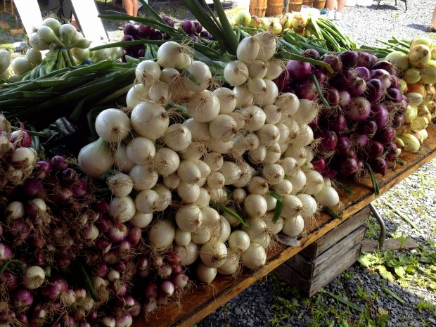 Black dirt country onions at Farmers Market, Florida, New York
