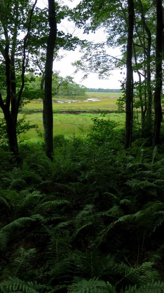 Salt marsh seen from Interpretive Trail, Rachel Carson National Wildlife Refuge, Maine