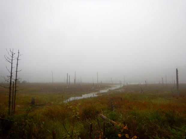 Fog over the bog, Caribou Plain, Fundy National Park, New Brunswick, Canada