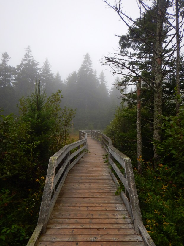 Boardwalk over beat bog, Caribou Plain Trail, Fundy National Park, New Brunswick, Canada