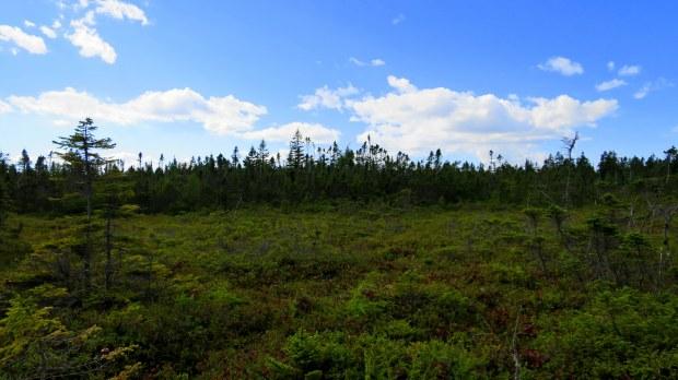 Bog, Nature Trail, New River Beach Provincial Park, New Brunswick, Canada