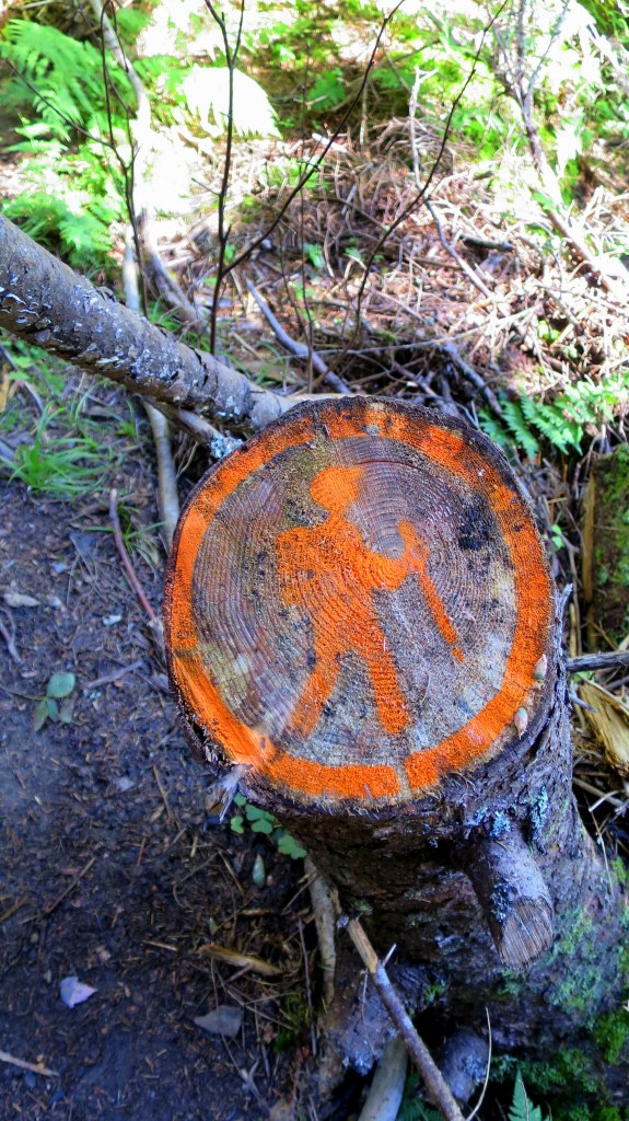 Creative trail marking, Moosehorn Trail, Fundy National Park, New Brunswick, Canada
