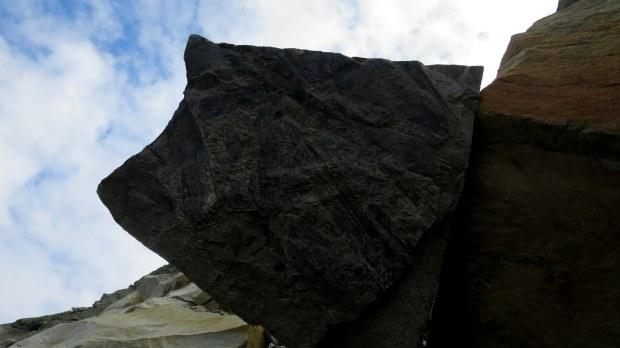 Fossils in the cliffs above, Joggins Fossil Cliffs, Nova Scotia, Canada