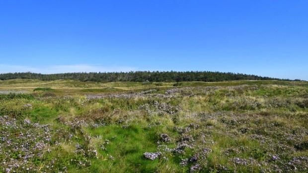 Boggy meadow with wildflowers, Coastal Trail, Brier Island Nature Preserve, Nova Scotia, Canada